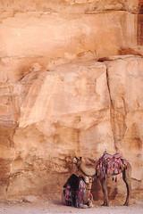 camel backdrop (marin.tomic) Tags: jordan jordanien petra camel desert trip holiday vacation arabian fujifilm xt2 traveler travel landscape nature