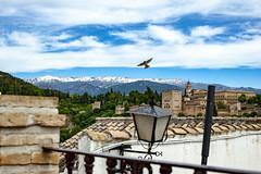 _DSC3389 (hedge climber) Tags: spain granada 2018 andalucia colourful travel nikon d700 architecture urban landscape