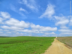 Tallgrass Prairie Nat'l Preserve, 2 May 2019 (photography.by.ROEVER) Tags: kansas vacation roadtrip trip 2019 may may2019 spring spring2019 minivacation chasecounty prairie flinthills tallgrassprairie tallgrassprairienationalpreserve landscape nationalparkservice park green hills tree clouds cloudy hike hiking trail scenicoverlooktrail usa
