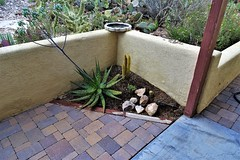 20190507 Plant Replacement in corener of back patio (lasertrimman) Tags: 20190507 plant replacement corener back patio