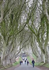 kingsroad4 (Shannon O'Haire) Tags: got gameofthrones ireland northofireland northernireland kingslanding kingsroad bregaghroad trees darkhedges nature tvshows gothsintrees