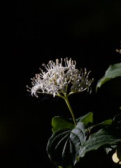 Fiori (Maria Teresa D) Tags: fiori natura parco montagna lago lavino abruzzo