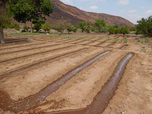 Well-based Small scale gravity irrigation, Djibouti (2)