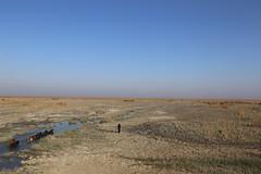 UN Environment's 2017 Ramsar Advisory Mission (UNEP Disasters & Conflicts) Tags: iraq unenvironment unenvironmentdisastersandconflicts marshes dry land centralmarshes marshland animals buffalos biodiversity