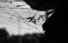 Death Is Forming (annie.cure) Tags: death web spider nest blackandwhite atmosphere alone insect effect exposure texture mysterious old monochrome porto portugal noise mood perspective canon 750d dark details strange view blur nature digital