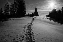 winter dreams 2015 (Toni_V) Tags: m2402371 rangefinder digitalrangefinder messsucher leica leicam mp typ240 type240 28mm elmaritm12828asph snowshoeing schneeschuhwanderung snow schnee euthal schwyz winter backlight gegenlicht bw monochrome blackwhite schwarzweiss landscape landschaft switzerland schweiz suisse svizzera svizra europe ©toniv 2015 150307
