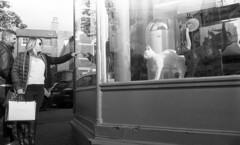 It's rude to point (4foot2) Tags: streetphoto streetshot street streetphotography candidportrate candid reportage reportagephotography people peoplewatching peopleofbrighton interestingpeople cats shopwindow shop window reflection point analogue film filmphotography 35mm 35mmfilm 35mmf2 35mmf2summicron summicron leica leicam3 m3 mono monochrome bw blackandwhite doublex kodakdoublex kodak rangefinder 5222 standdevelop rodinal brighton laines 2019 fourfoottwo 4foot2 4foot2flickr 4foot2photostream