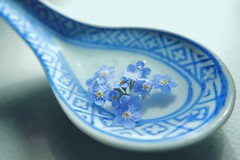 A Spoonful of forget me not (7 Blue Nights) Tags: blue spoon vase macro soft water aspoonful
