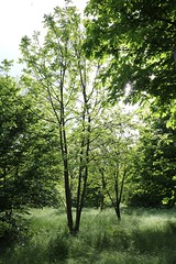 Hope for Forest (pascal445) Tags: lanscape wood bois forestier forest forêt campagne outdoor beautiful beauty green hope natural nature trees tree arbre