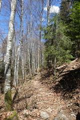 Hike around Pointe de Chenevier (*_*) Tags: april spring printemps 2019 bornes pointedechenevier europe france hautesavoie 74 annecy sourcesdulacdannecy savoie hiking mountain montagne nature randonnee walk marche trail sentier forest sunny
