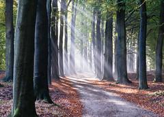 Hoog Buurlo (johan wieland) Tags: 2016 autumn herfst hoogbuurlo veluwe radiokootwijk gelderland netherlands