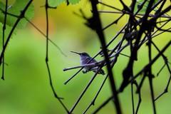 RTHB (Liam A. Hart) Tags: birds nature pennsylvania spring wildlife wild