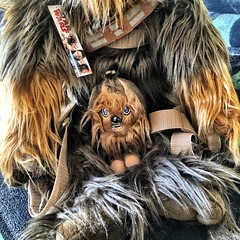 """My Chewbacca """"Chewie"""" Plush Backpack Buddies from Star Wars (05/08/19) #wookieewednesday #disney #comicimages #starwars #chewbacca #chewie #wookiee #plush #backpackbuddies #babychewie (iTeodoro1991) Tags: wookieewednesday disney comicimages starwars chewbacca chewie wookiee plush backpackbuddies babychewie"""