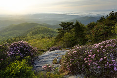 A Carolina Morning (R. Keith Clontz) Tags: springtime colorful northcarolina hawksbillmountain morning mountainridges foothills sunny sunshine greening linvillegorge rhododendron valley