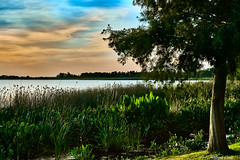 Magnolia Park on Lake Apopka (Alfredo Rafael) Tags: fl trees water apopka lake large shoreline clouds sunset