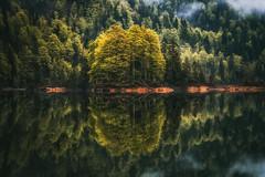 Dreamlike (der_peste (on/off)) Tags: reflection reflections mirror nature lake forest woods woodland trees mist fog moody mood serene tranquility silence bavaria weitsee ruhpolding reitimwinkel bayern alpen chiemgau