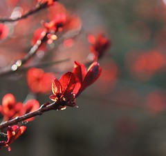 Sorround by red (erlingraahede) Tags: denmark holstebro vsco canon bokeh flowers red