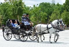 PRIMAVERA EN SEVILLA (ANDALUCÍA/ESPAÑA/SPAIN) (DAGM4) Tags: 2019 andalucía españa europa europe espagne espanha espagna espana espanya espainia spain spanien horse caballos feriadesevilla sevilla