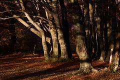Wood (Strocchi) Tags: wood bosco elcito macerata marche faggeta canon eos6d 24105mm