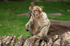 IMG_0067 (dylan21hayla) Tags: flicker northern bird birding natue wildlife canon naturesharmony starc283 natures finest explore half million views natural nature watcher flickr monkey singe