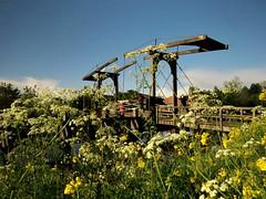Flower supported bridge (Mattijsje) Tags: holland wilhelminavanpruisenbrug hekendorp fietsersbrug bridge gekanaliseerdehollandseijssel ijssel flowers spring bicycle