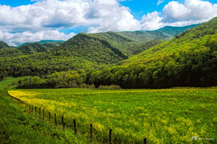 The Hills (James Korringa) Tags: westvirginia hills scenic landscape field green flowers clouds explore