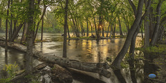 Sunset on Boise River 2019 (TheArtOfPhotographyByLouisRuth) Tags: river artofimages louisruthphotography landscape boiseidaho nikond810 sunset sunrise trees water reflections illuminations nikonflickraward view perspective lightinf sunburst award tones balance thisshouldbeapostcard opticalexcellance path rd treelimb grass softlight leaves springtime sping2019 idahoparksandrec favorite throughthelens thehouseofimagegallery prophoto star red orange branches streams creeks pro viewpoint pronature log greatimage exposure pp prophotoaward onesweetworld joy aggroup tree park forest flood qualitytoadmire landscapes sunsetslandscapessculptures quality flickrlandscapes lightonwater lightingtechiques administratorsfavouritesofthemonth thebestwaterscapesandlandscapes louisruth amazingphoto flickr scapes shimmer local photosinidaho beautifulidaho idahophotographers seenonflickr