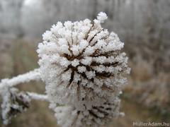 Hideg van... (MullerAdam_hu) Tags: tél természet erdő hó jég magyar magyarország adony canonpowershots2is 2008 winter nature forest month ice hungarian hungary