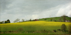 The yellow patchwork (Elisafox22) Tags: elisafox22 rx100 hff fencefriday fencedfriday fence fenceposts rapeseed yellow fields tees grass hillside trees field sky clouds turbine houses outdoors aberdeenshire scotland elisaliddell©2019 tistheseason