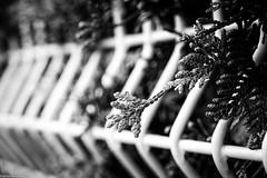 escape (fhenkemeyer) Tags: fence hff