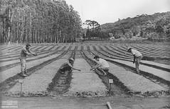 Agricultores (Arquivo Nacional do Brasil) Tags: agricultura agricultor lavoura plantação riograndedosul memóriagaúcha históriagaúcha arquivonacional arquivonacionaldobrasil nationalarchivesofbrazil nationalarchives história memória