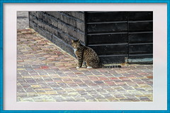 Cat at the stable (gill4kleuren - 18 ml views) Tags: pussy puss poes chat mieze katje gato gata gatto cat pet animal kitty kat pussycat poezen