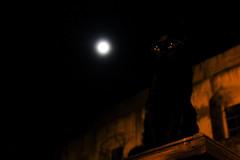 Black Cat in Moonlight (David M. Stucki) Tags: black cat moon moonlight night mysterious magic schwarz katze mond mondlicht mysteriös zauberhaft geheimnisvoll lipari stadt nacht augen ruhig calme italy outside efs18200mmf3556is photosofitaly