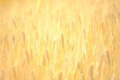 DSCF1550 (Keishi Etoh rough-and-ready photoglaph) Tags: fujifilm xt1 fujifilmxt1 apsc valdaihelios44258mmf20 87mm helios442 helios mf manualfocuslens primelens fixedfocallengthlens oldlens m42 単焦点 中望遠