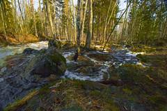 Ulkkajoki (aimoräty) Tags: lieksa finland river water rapids forest