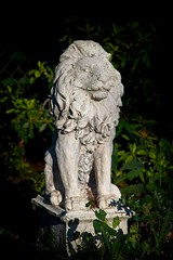 On Guard - HSS (JSB PHOTOGRAPHS) Tags: 8008858 a powerful pose fence lion sunday sliderssumday hss