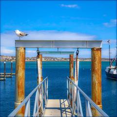 The Sentinel (Timothy Valentine) Tags: clichésaturday gull harbor sea ptown 0419 large bird sky 2019 provincetown massachusetts unitedstatesofamerica