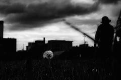 P5025825B Dandelion (soyokazeojisan) Tags: japan osaka city street dandelion sky clouds people bw blackandwhite monochrome digital olympus em1markⅱ 12100mm 2019 morning