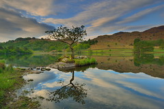 The Rydal tree (images@twiston) Tags: rydal water riverrothay spring morning dawn clouds reflections reflected still calm lake cumbria lakedistrict lakeland thelakes nationalpark nationaltrust landscape imagestwiston countryside mountain nisi nisifilters gnd neutraldensity grad englishlakedistrict unesco worldheritagesite lone tree islet island