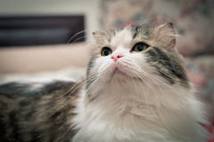 DSC_0026 (漫步攝影(Jershliou)) Tags: catlife cat catfamily cats cutecat lazycat animal cute 貓