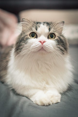DSC_0010 (漫步攝影(Jershliou)) Tags: catlife cat catfamily cats cutecat lazycat animal cute 貓