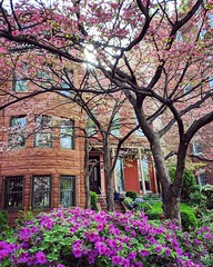 outside! (ekelly80) Tags: dc washingtondc april2019 spring outside walk flowers purple azalea trees