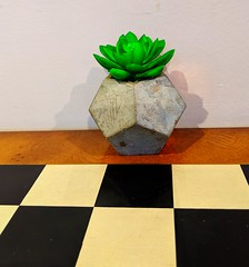 coffee shop cactus (ekelly80) Tags: massachusetts marlborough april2019 spring newengland thecoffeeloft coffee shop breakfast morning pink chess cactus succulent tiny cute
