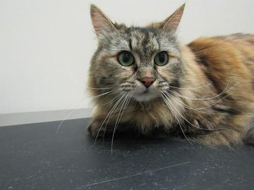Cassie - 12 year old spayed female