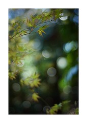 2019/4/3 - 2/12 photo by shin ikegami. - SONY ILCE‑7M2 / Carl Zeiss C Sonnar T* 1.5/50 ZM (shin ikegami) Tags: sony ilce7m2 sonyilce7m2 a7ii 50mm carlzeiss sonnar csonnar50mmf15 tokyo sonycamera photo photographer 単焦点 iso800 ndfilter light shadow 自然 nature 玉ボケ bokeh depthoffield naturephotography art photography japan earth asia