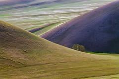 #maksileni, #Максименко_Леонид, #Leonid_Maksimenko, #Landscapephotography, #своифото, #пейзаж, #природа, #утро, #рассвет, #дерево, #натура, #восход, #sunrise, #nature, #tree, #Landscape, #sun, #туман, #лучи, #foggy, #природа, #небо, #небоголубое, #сониаль (ЛеонидМаксименко) Tags: bestofrussia uralinsta сониа6000 maksileni leonidmaksimenko natgeoru foggy nature небо природа натура дерево etonashural sun рассвет своифото sunrise natgeorussia сониальфа landscapephotography пейзаж восход sonyalpha небоголубое утро sonya6000 лучи tree landscape natgeoyourshot туман максименколеонид