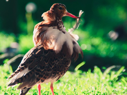 Bird Bokeh - 11. Mai 2019 - Schleswig-Holstein - Germany