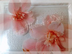 """To all the mothers of the world!"" (Marcia Portess-Thanks for a million+ views.) Tags: labelleza luz light glass love beauty photoart elarte art delicado delicate sauve petals photography soft camelias blossoms pink fleur flores flowers happy mother'sday2019 marciaaportess marciaportess map mothersoftheworld"