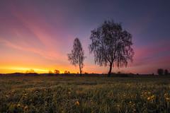 Pink sky (Sebo23) Tags: landscape landschaft licht lichtstimmung light nature naturaufnahme natur morgenstimmung morninglight morgenlicht canon16354l canoneosr
