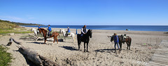 Horse riding at La Alcaidesa beach (B℮n) Tags: spain andalusia andalusië castle monument castillodecolomares andalucía spanje mountains valley kasteel christopher colobus explorer holiday vacation mediterranean sea benalmádena castillo monumento colomares tourism sevilla olives sunflowers oranges winter gibraltar rock therock mediterraneansea beach sandy alcaidesa playa playadelaalcaidesa therockofgibraltar costadelsol europe walking hiking beachwalk romantic romance horse horses paarden horseriding 50faves topf50